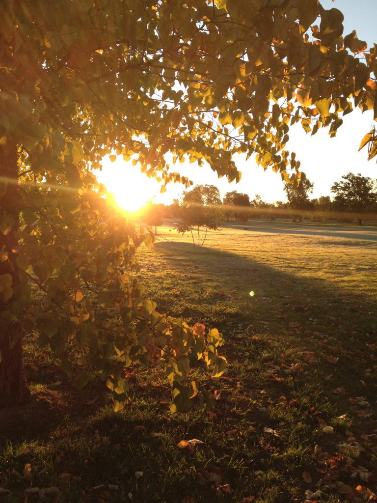 Sweet November. Day Light Savings makes waking up a little easier.