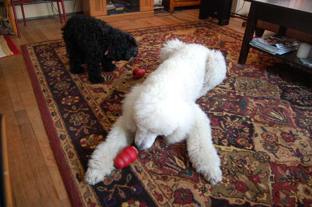 The biscuits fit great inside the kong toys.